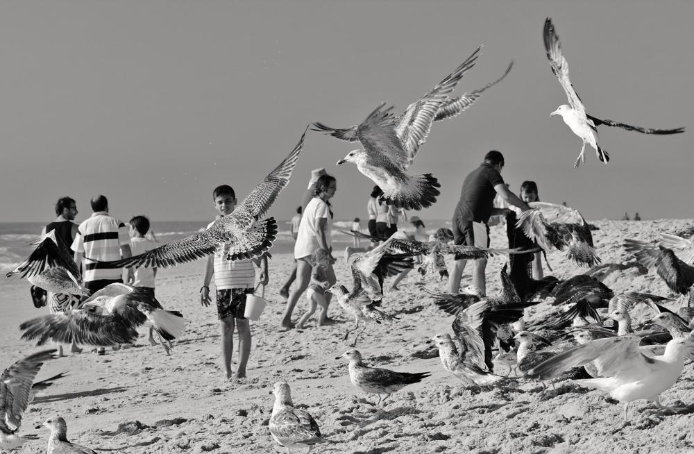 praia VIEIRA areia gaivota