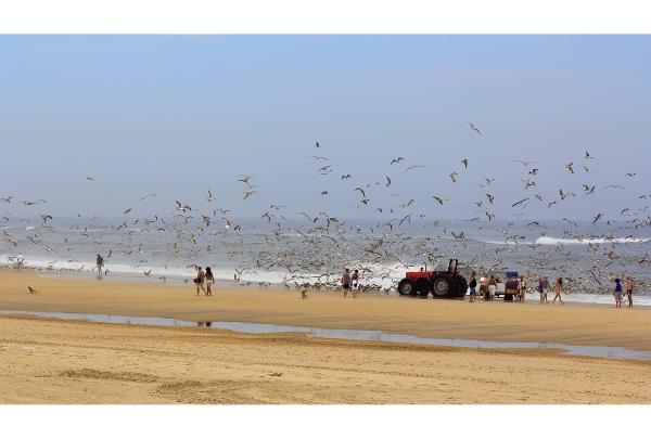 vieira gaivota ave pescador arte-xávega praia mar