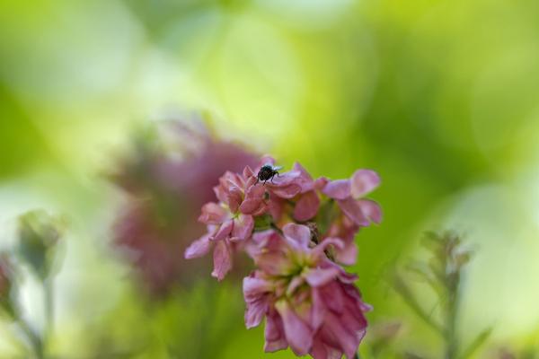 coimbra flor insecto mosca