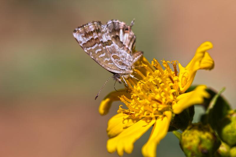 coimbra flor insecto borboleta