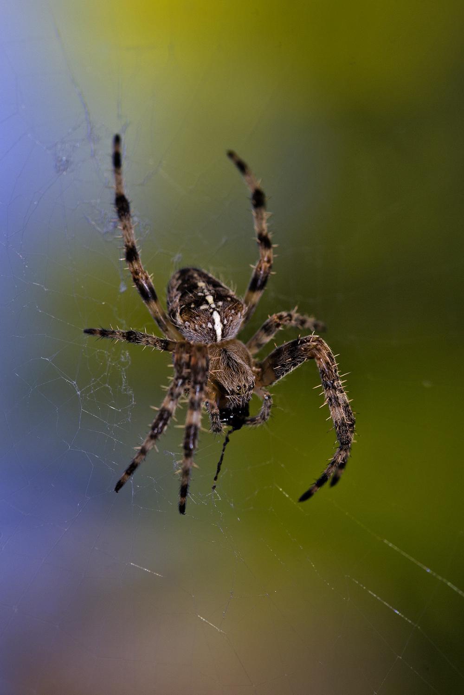 coimbra aranha