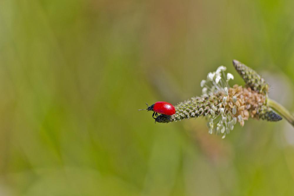 aveiro pateira fermentelos insecto coleoptera