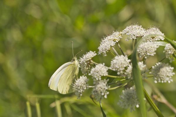 aveiro pateira fermentelos borboleta