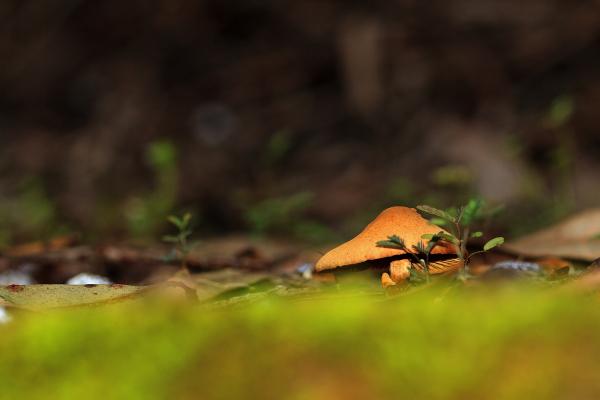 cogumelo pedrodemoel