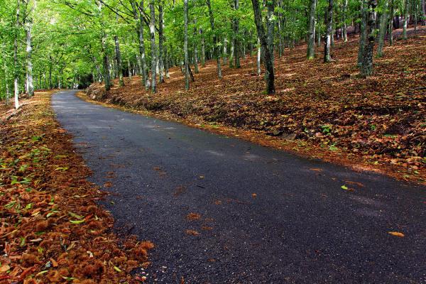 lousã caminho outono