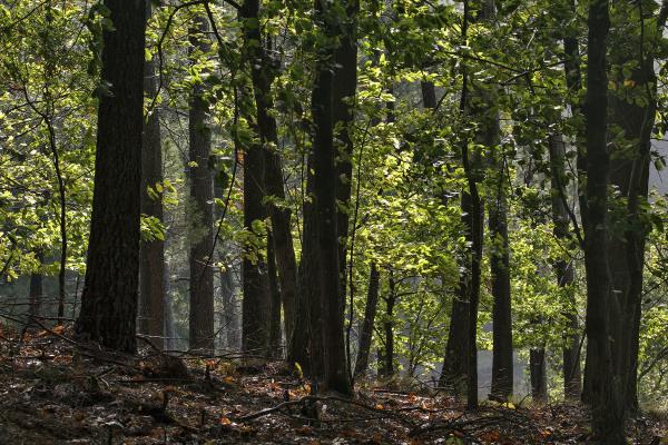 lousã floresta