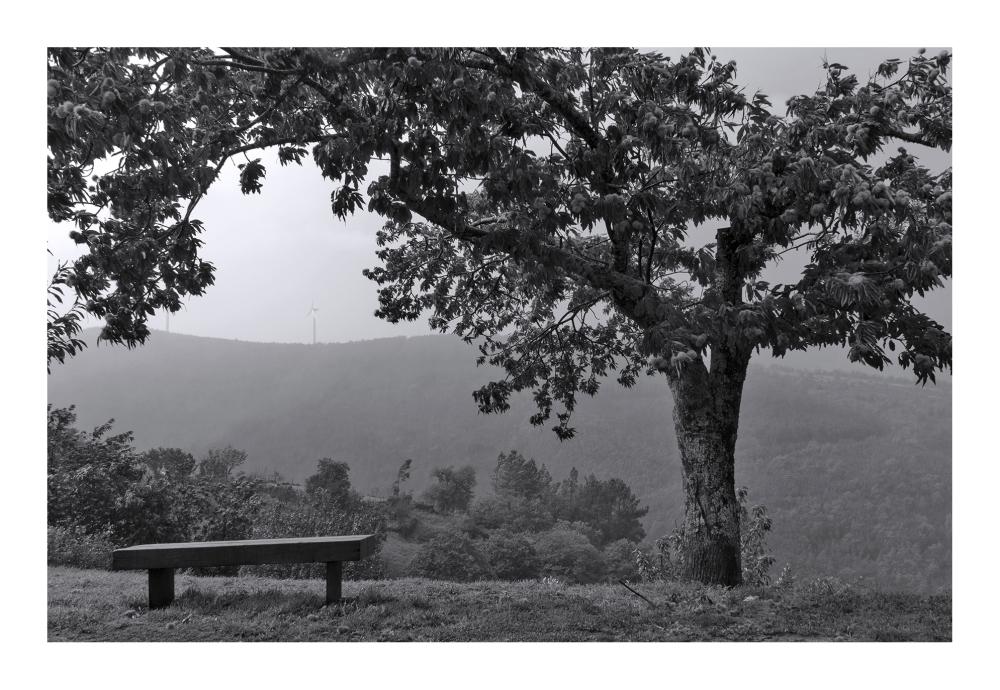 lousã outono aldeia nevoeiro Aigra-Nova árvore