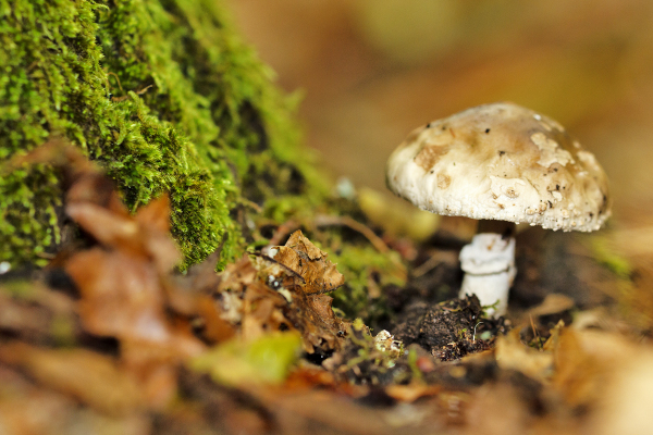 lousã  outono  cogumelo