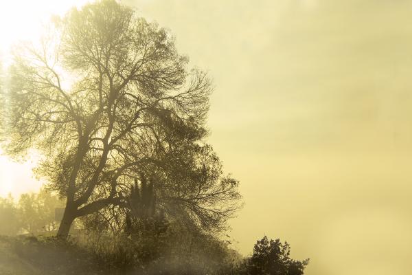 sunrise outono nevoeiro arvore