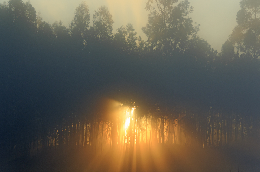 sunrise outono nevoeiro