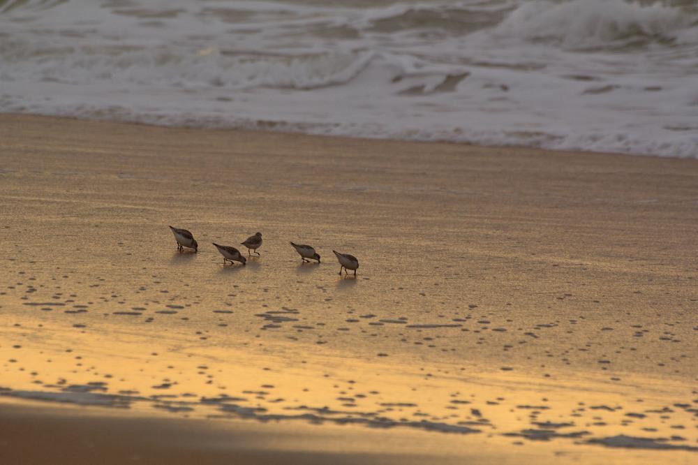 vieira praia sunset ave
