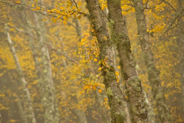 serraestrela manteigas outono nevoeiro