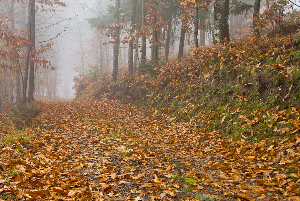 serraestrela manteigas outono nevoeiro caminho