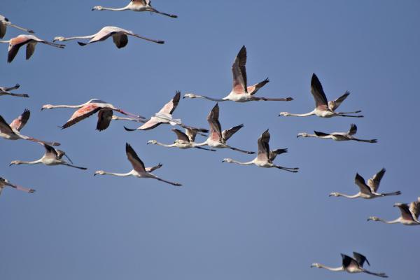 aveiro flamingo