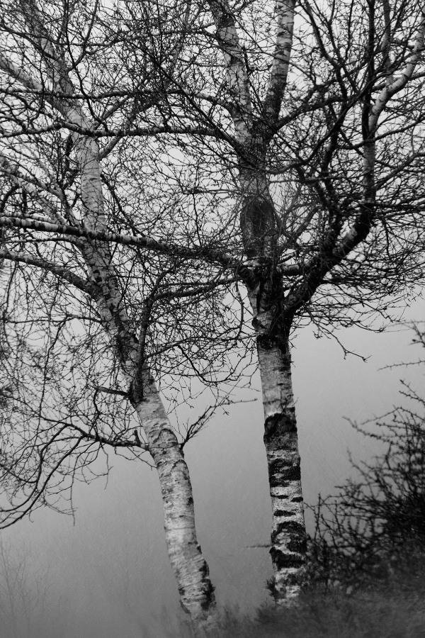 lousã inverno nevoeiro árvore