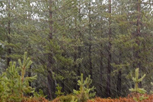 lousã inverno nevoeiro árvore neve vento