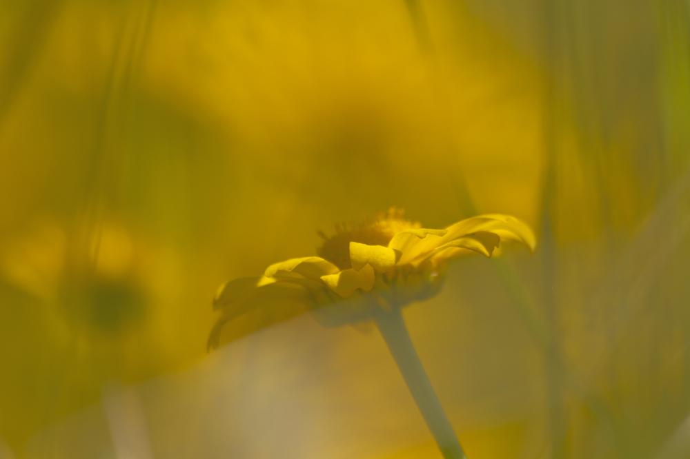 aveiro bioria flor salreu amarelo