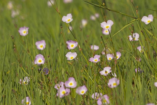 aveiro ria-de-aveiro bioria salreu flor