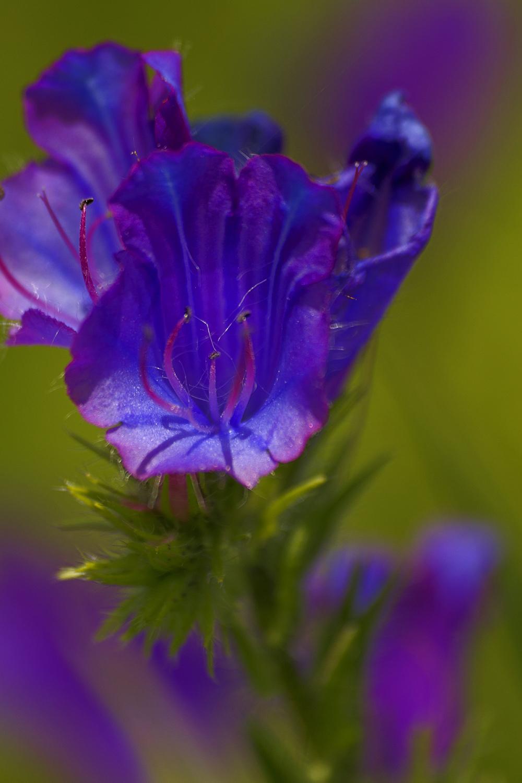 aveiroa salreu bioria flor