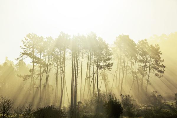 pnsac árvore sunrise