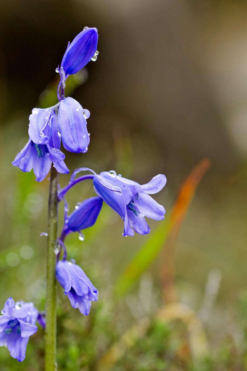 pnsac flor jacinto