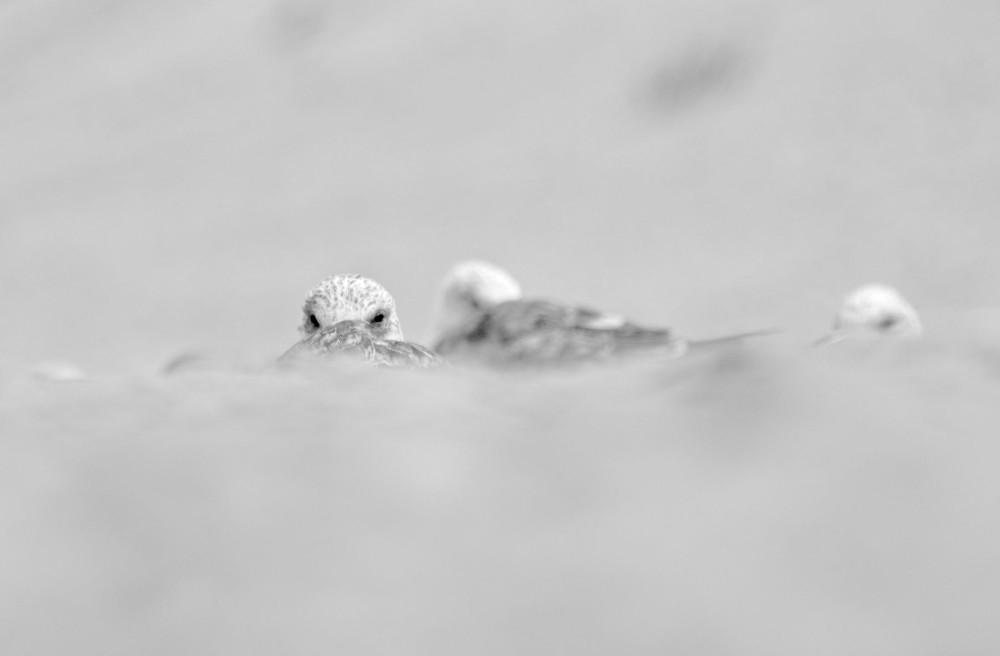 vieira praia gaivota