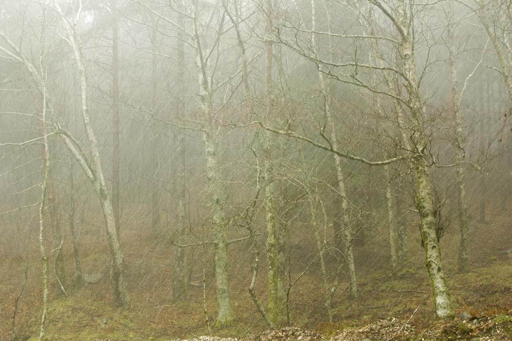 lousã inverno arvore chuva