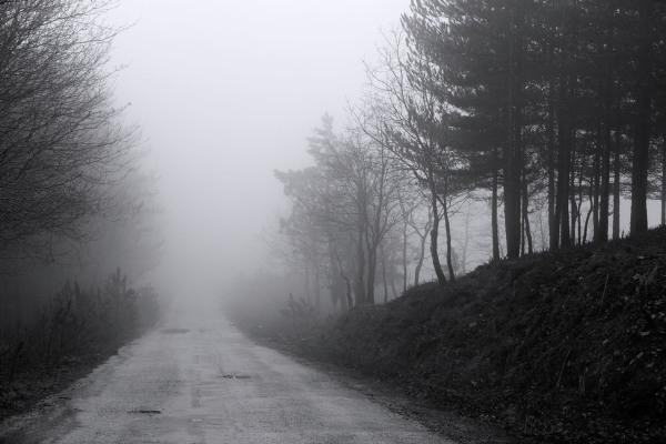 lousã inverno arvore nevoeiro caminho