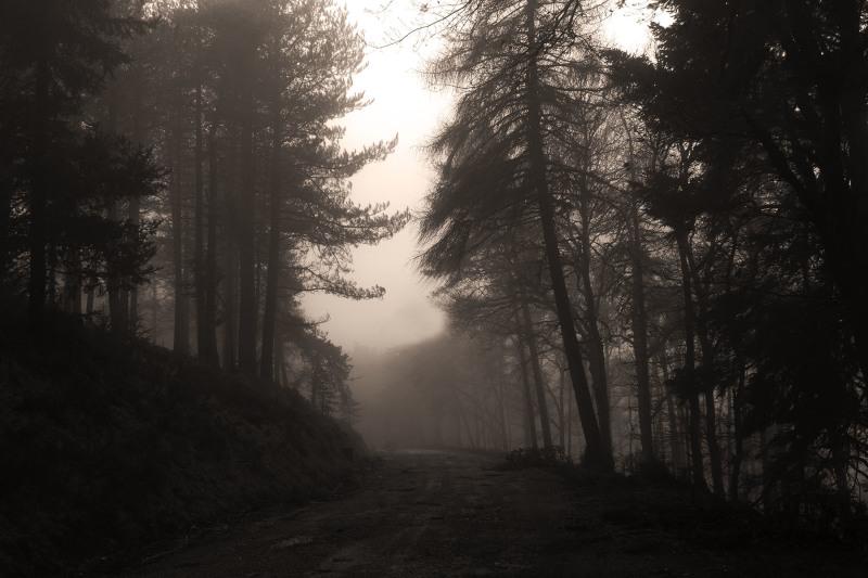 lousã inverno nevoeiro arvore