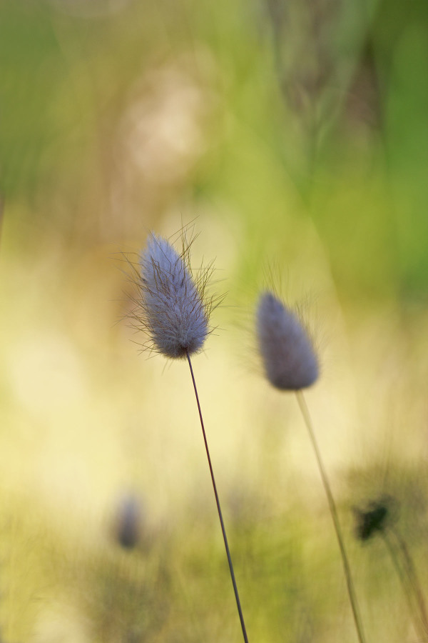 flor sintra