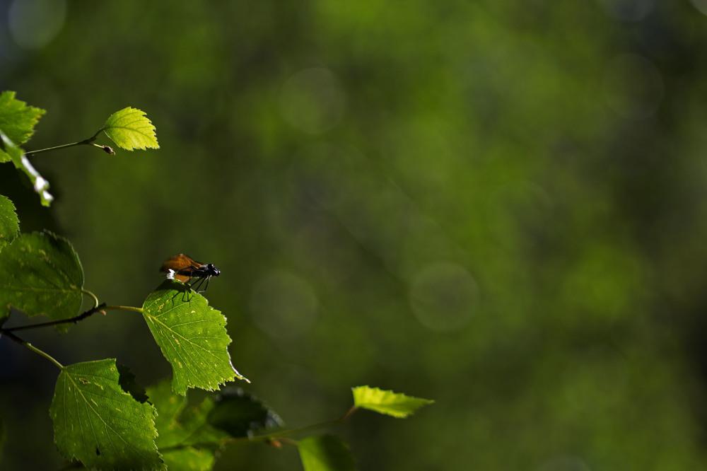 serraestrela libelinha covão-da-ametade