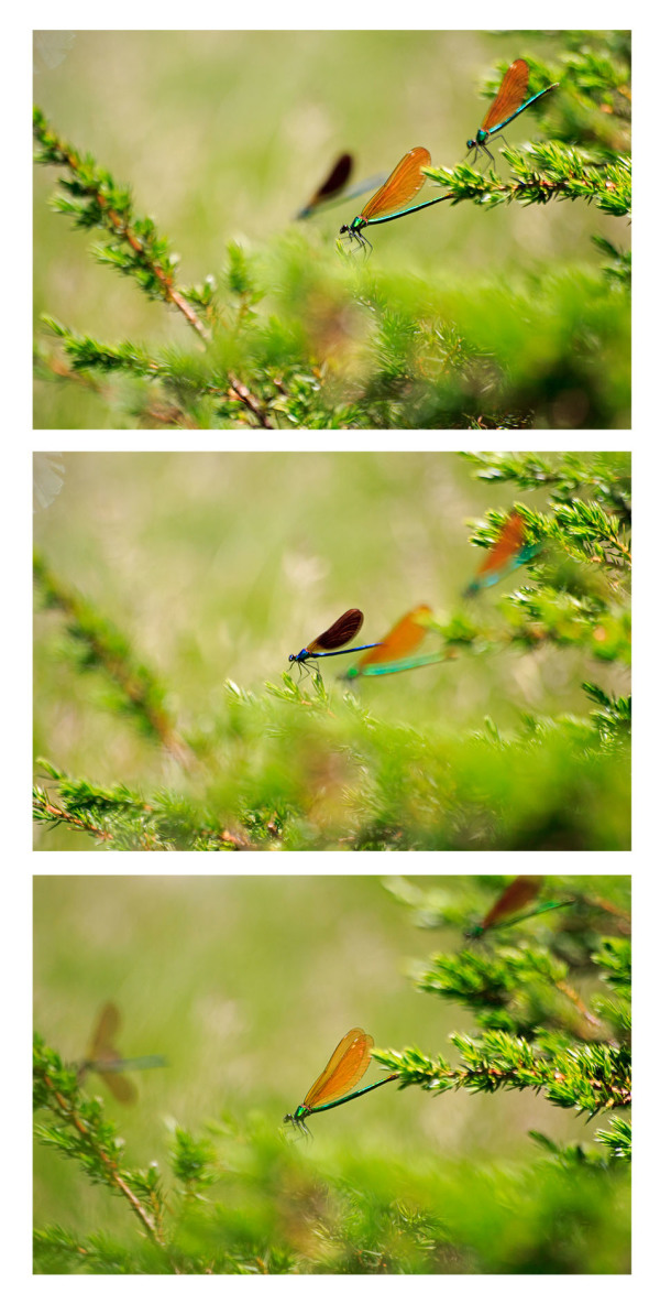 libelinha serraestrela covãodaametade