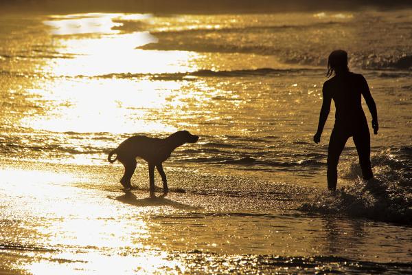 peniche  mar baleal  cão praia sunset