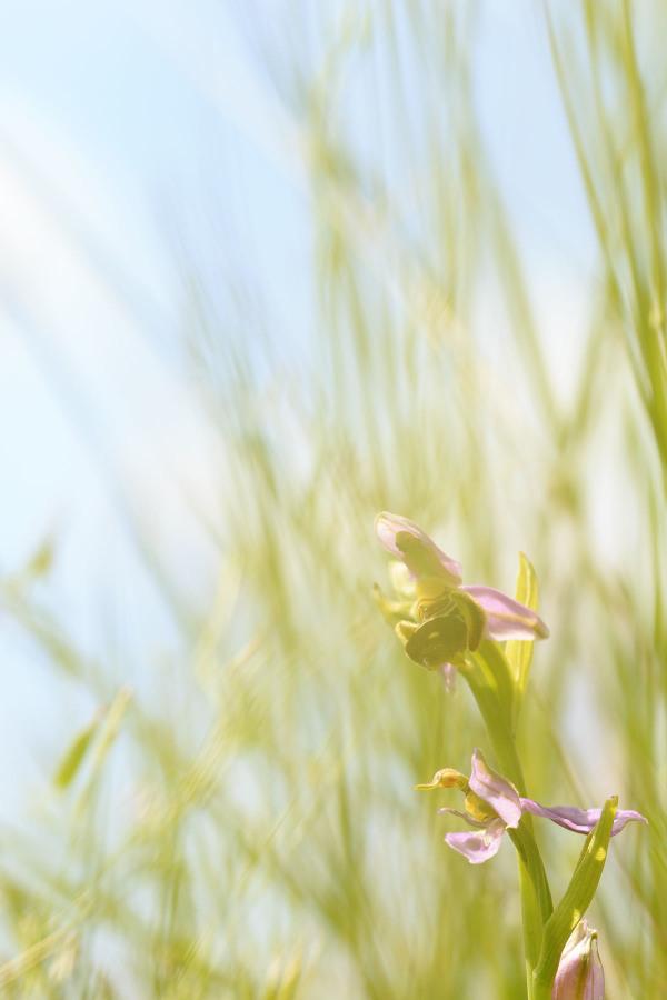 Orquídea selvagem
