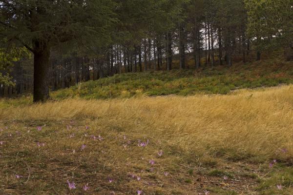 lousã outono flor santoantóniodaneve arvore açafrã