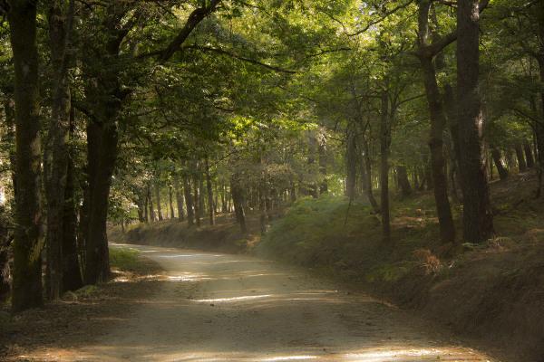 lousã  outono árvore caminho