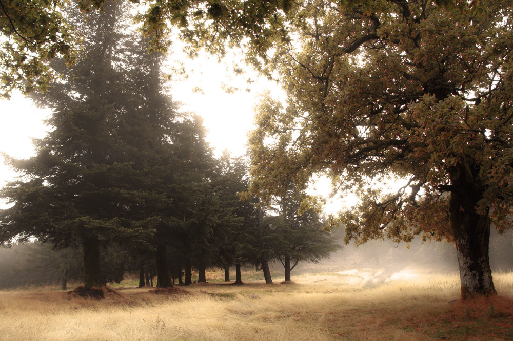 lousã santoantóniodaneve outono árvore nevoeiro
