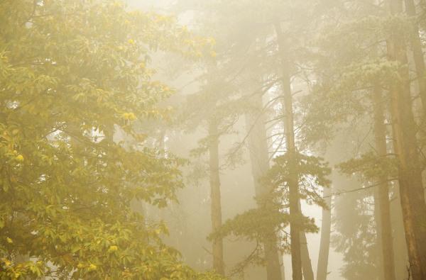 lousã  outono nevoeiro arvore pinheiro castanheiro