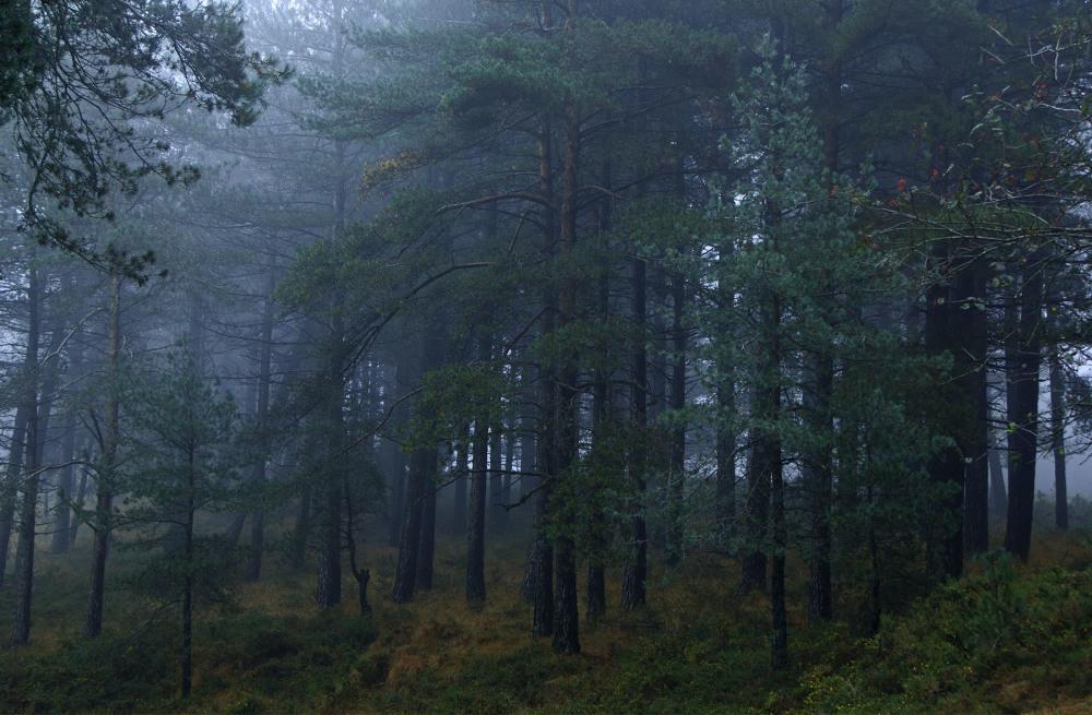 lousã  outono nevoeiro árvore pinheiro