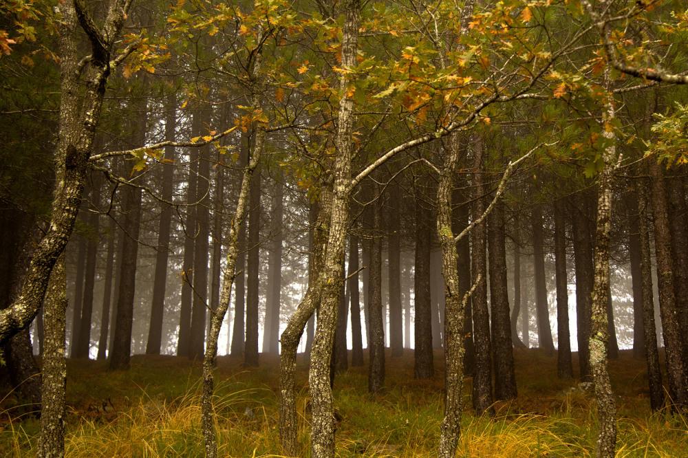 lousã  outono nevoeiro arvore pinheiro carvalho