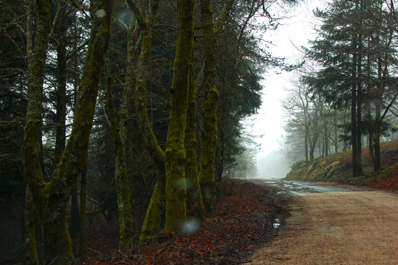 lousã primavera  nevoeiro arvore caminho