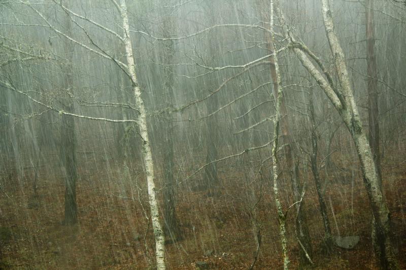 lous nevoeiro arvore neve chuva