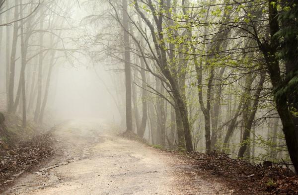 lousã inverno nevoeiro arvore caminho