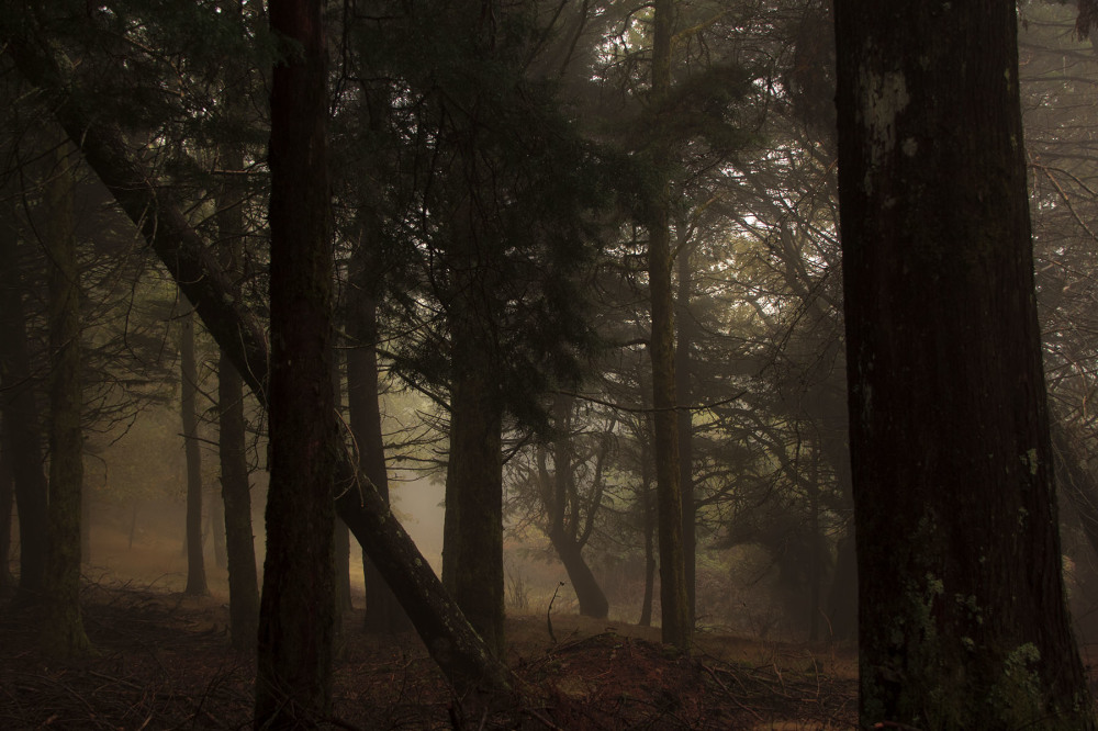 lousã outono nevoeiro arvore pinheiro