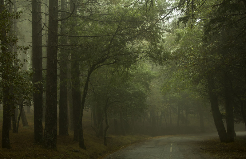 lousã outono nevoeiro arvore pinheiro caminho