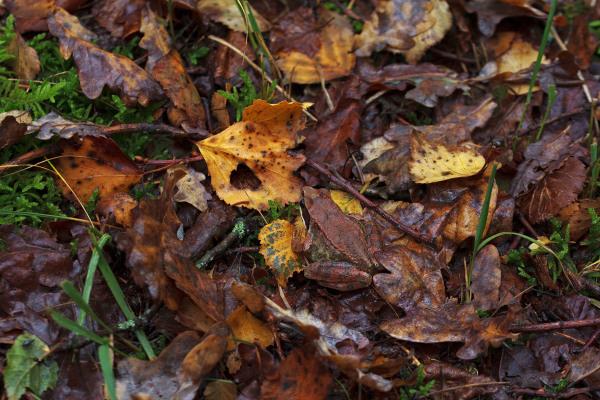 caramulo rã outono penoita