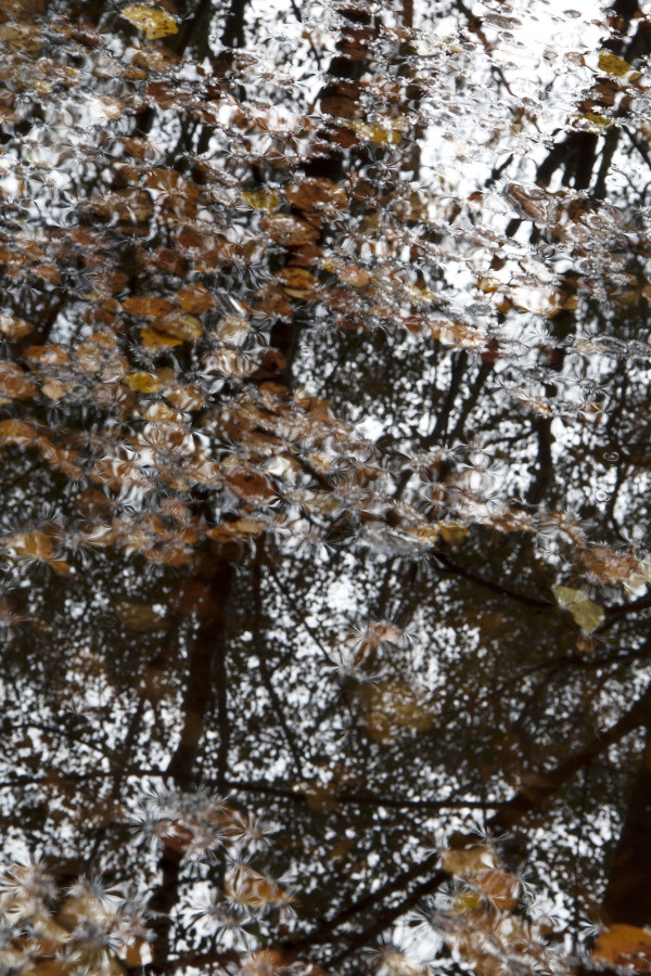 caramulo outono penoita