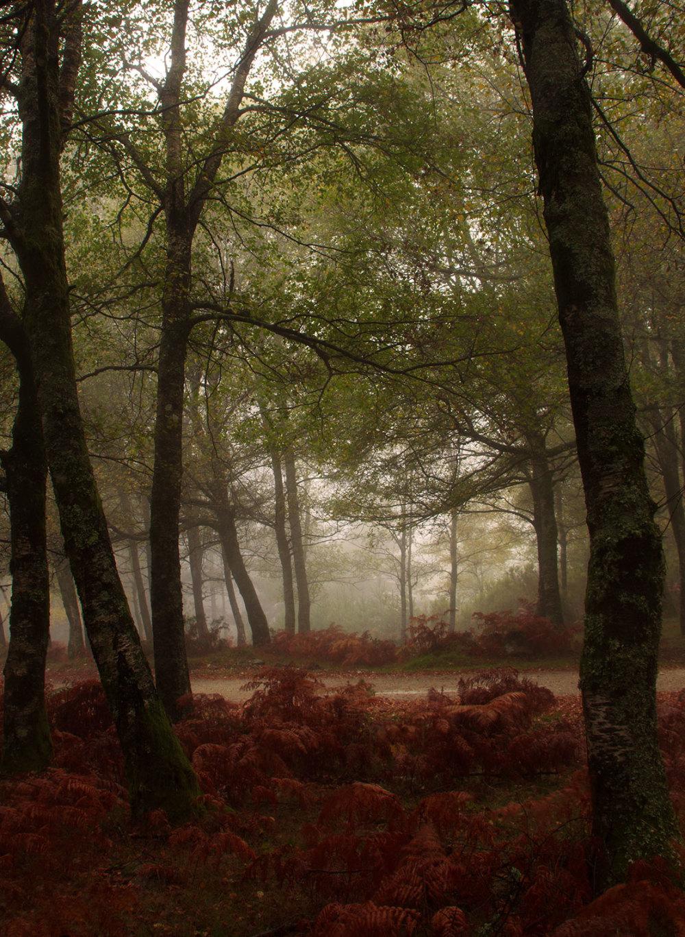 alvão outono nevoeiro