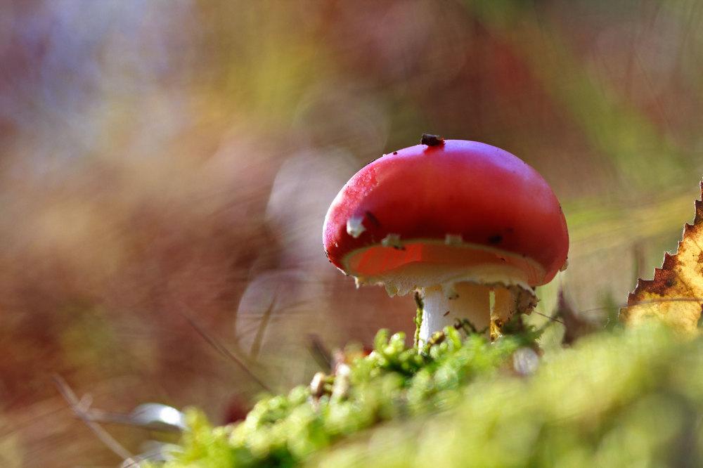 alvão nevoeiro outono cogumelo