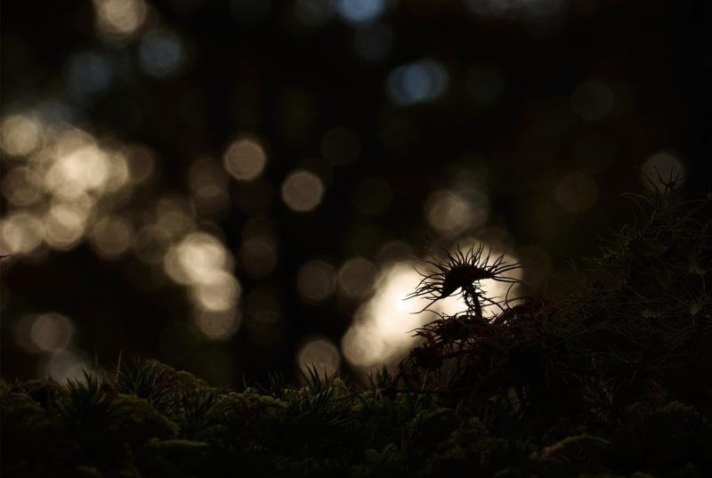 Luzes do outono